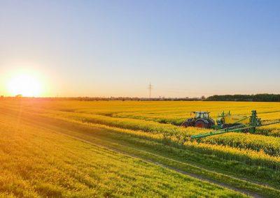 BLV_Landwirtschaft-Raps_low