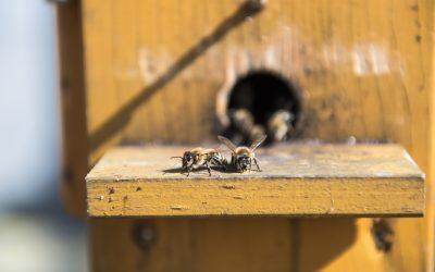Insekten brauchen Bauern – top agrar-Wettbewerb