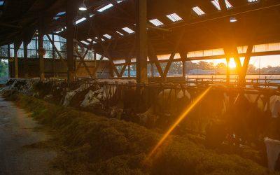 Landwirtschaft heute – unsere Position