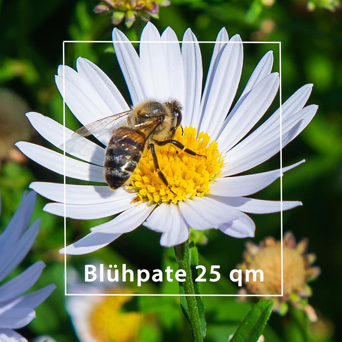 Blühpate insektenschutz Bremen