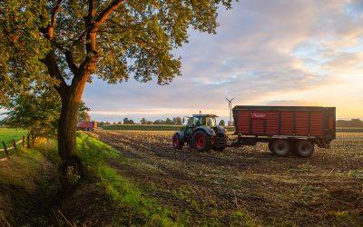 Maisernte in Bremen und der Region